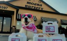 Sunglassed dog in front of Moana Nursery
